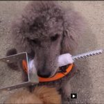 Hundene transporterer stolpesko til nøstetomten