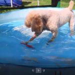 Kaiza koser seg i et plaske basseng.