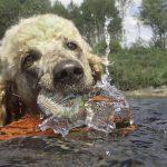 Kaiza svømmer i motstrøm